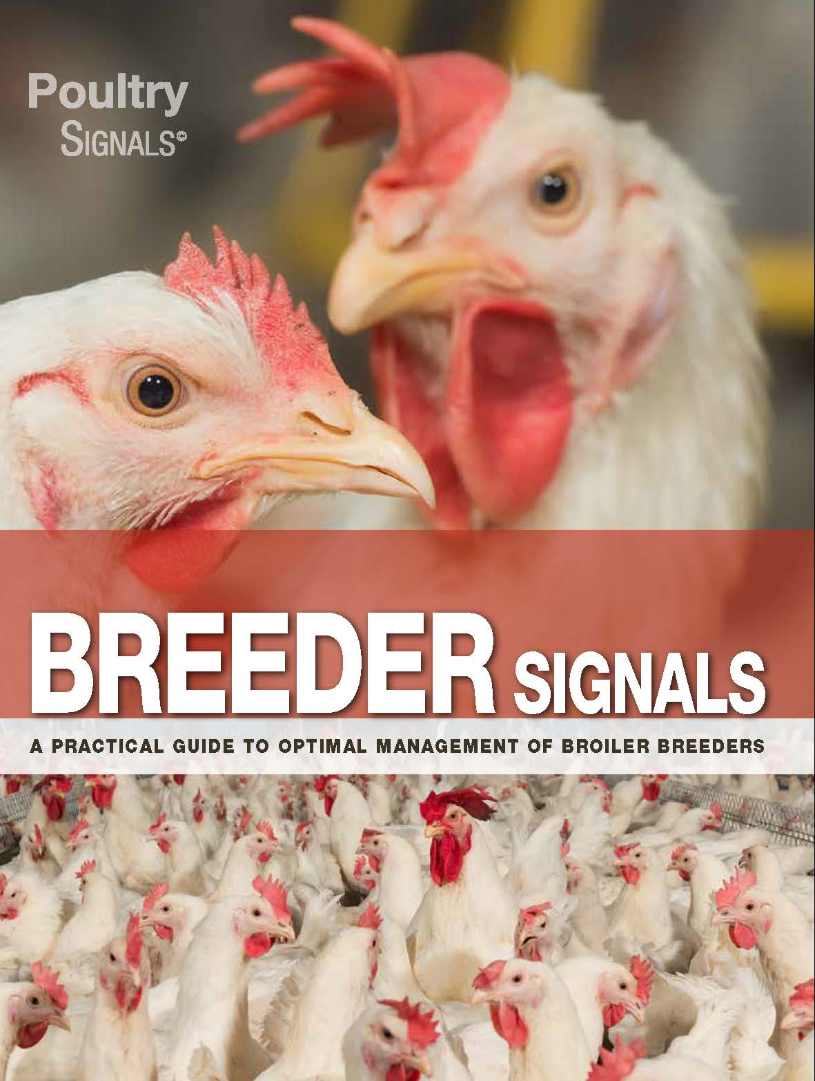 Breeder Signals