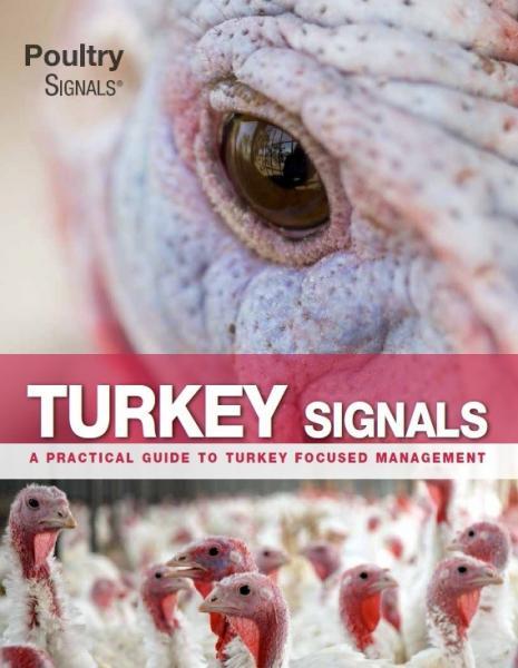 Turkey Signals